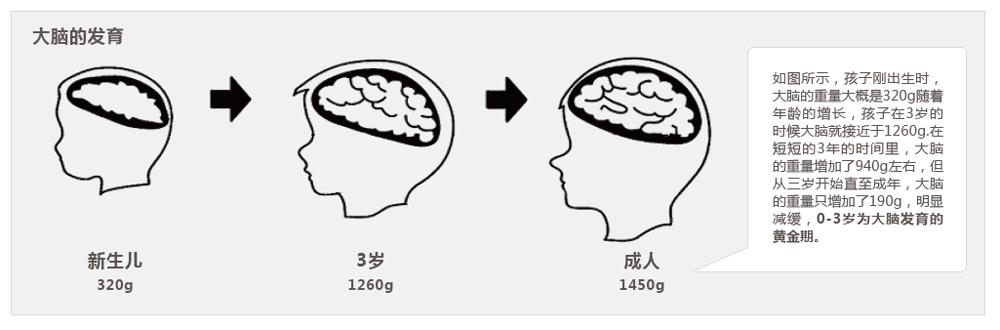 尾页-3大脑可塑性研究-1.png