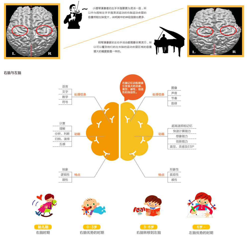 尾页-3大脑可塑性研究-6.png